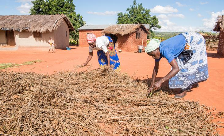 Malawi Permakultur Schulgarten