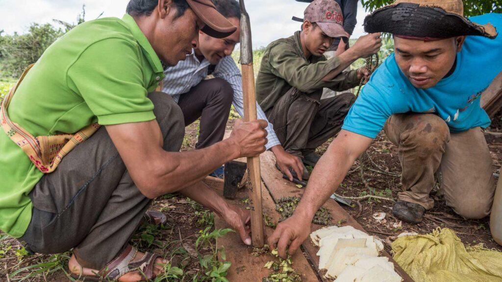 Biolandbau Indigene Gemeinschaft Kambodscha