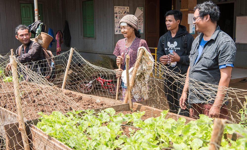 Anbau von biologischem Gemüse