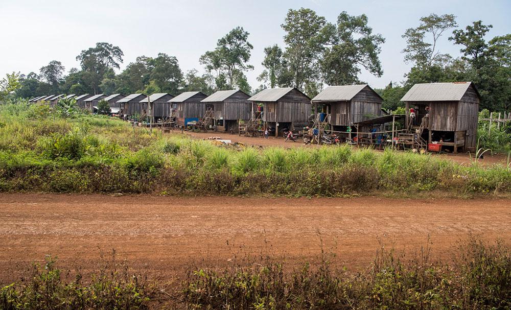 Neben den Monoplantagen entstehen neue Siedlungen mit Häusern, in denen die Angestellten der Kautschukfirmen leben