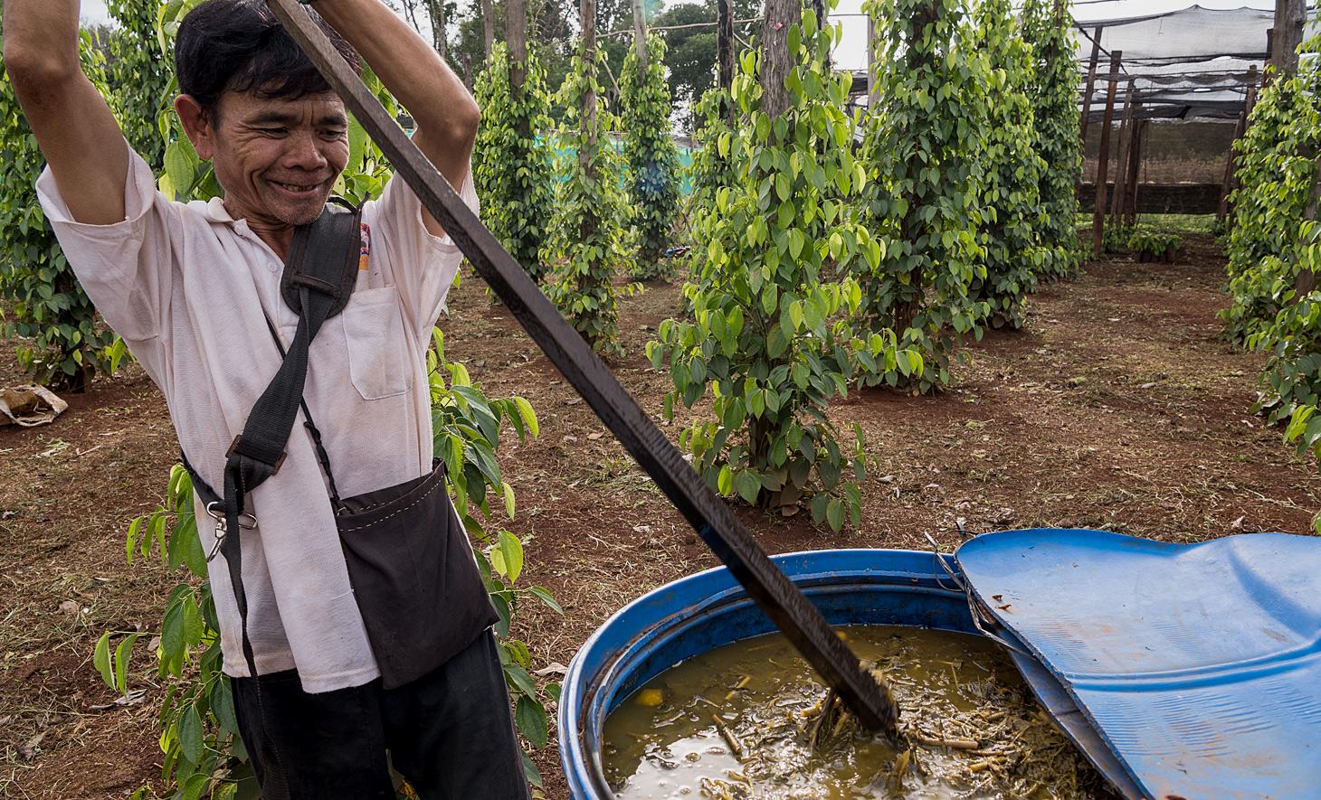 Pokhat Seav mischt seinen flüssigen Dünger aus Kürbis, Papaya und Büffelkot mit menschlichem Urin, was sich gut auf seine Pfefferpflanzen auswirkt.