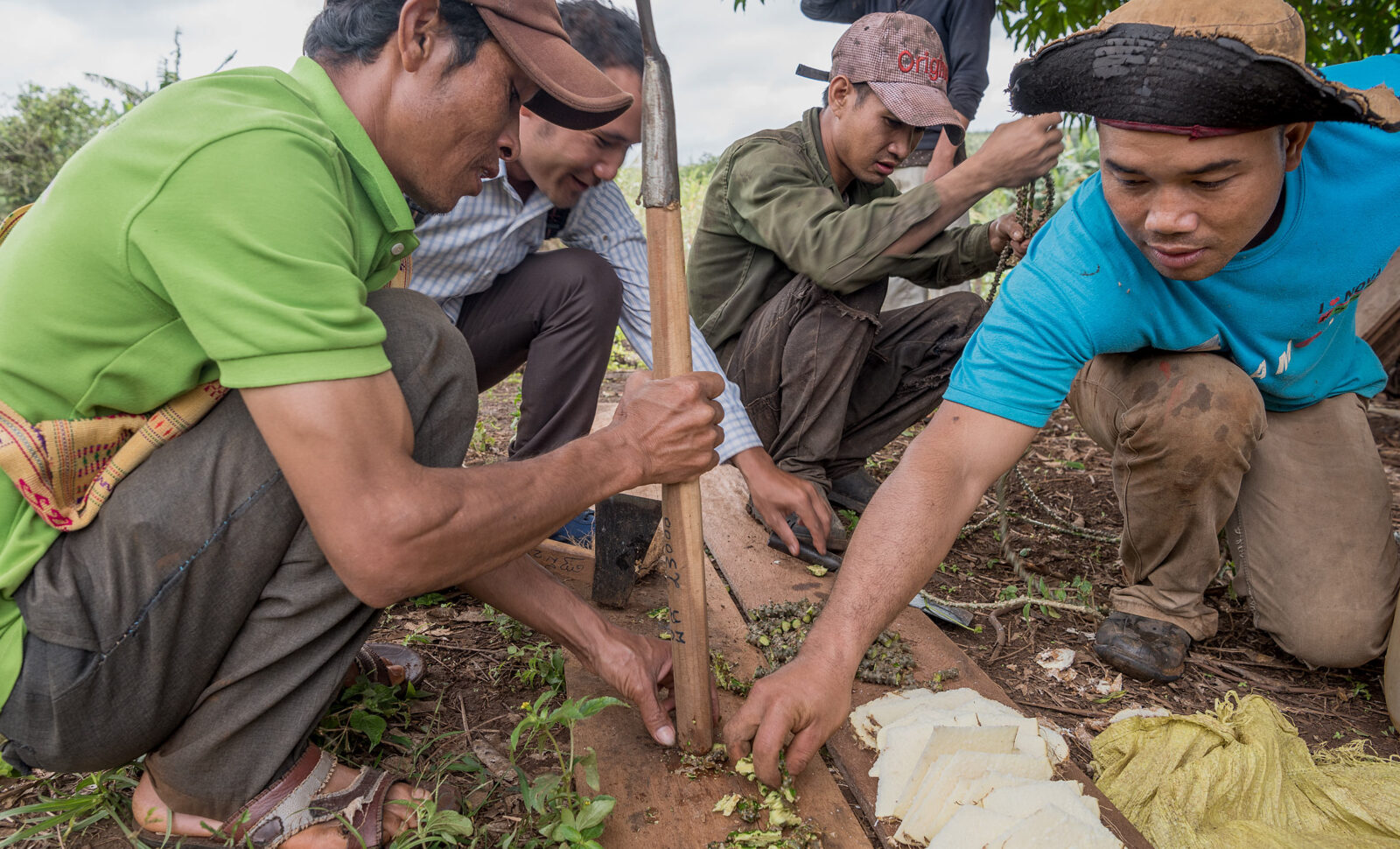 BIPA lehrt, biologischen Dünger herzustellen. Dorfgemeinschaft bewirtschaftet gemeinsam ein Pfefferfeld mit 600 Pfefferstangen.