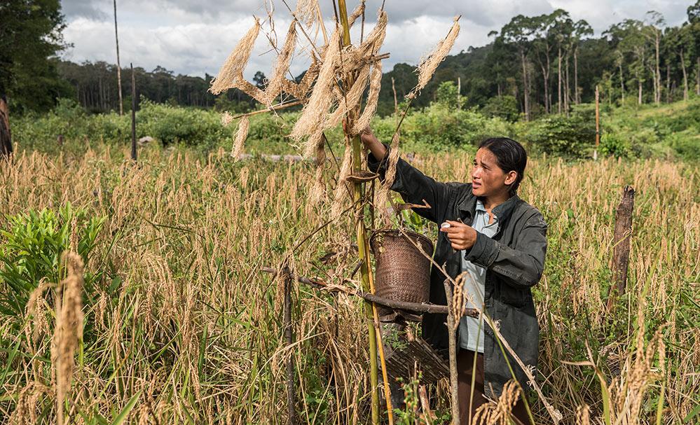 Bunong – Zeremonie für die Reis-Geister