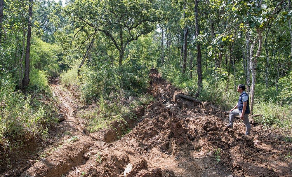 Waldrodung – Zerstörung von immer mehr Wald